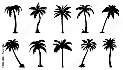 palm silhouttes #77134232