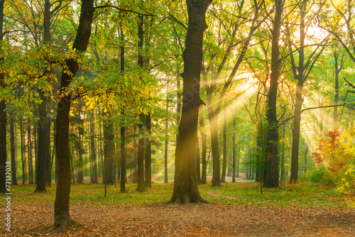 Poster Miel bright rays of the sun in the morning empty forest