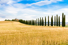 Country Road Flanked With Cypresses In Tuscany, Italy