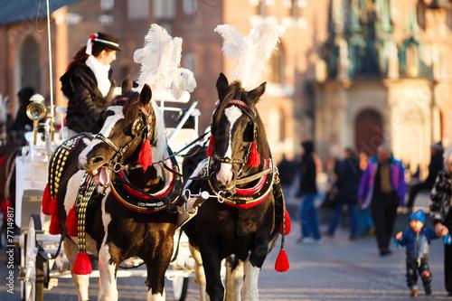 Fototapeta Horses in Krakow obraz