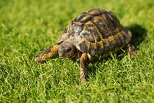 Tourtle Tortoise