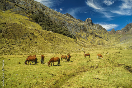 Photo Stands Grocery Peruvian Andes