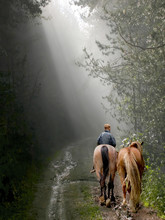 Old Man Riding Horses In A Misty Forest