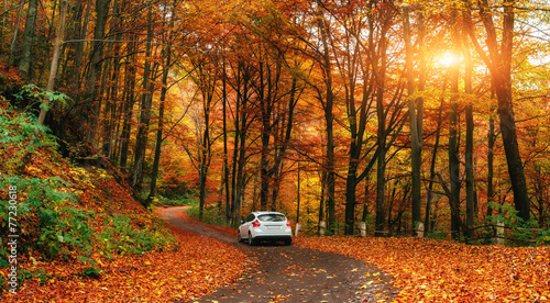 fototapeta na lodówkę samochód na leśnej drodze