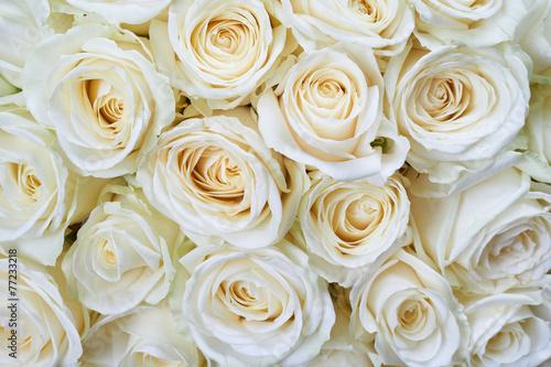 tlo-biale-roze