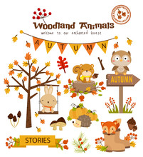 Animal Woodland Autumn Vector ...