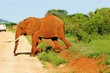 canvas print picture - Roter Elefant in Tsavo West - Kenia