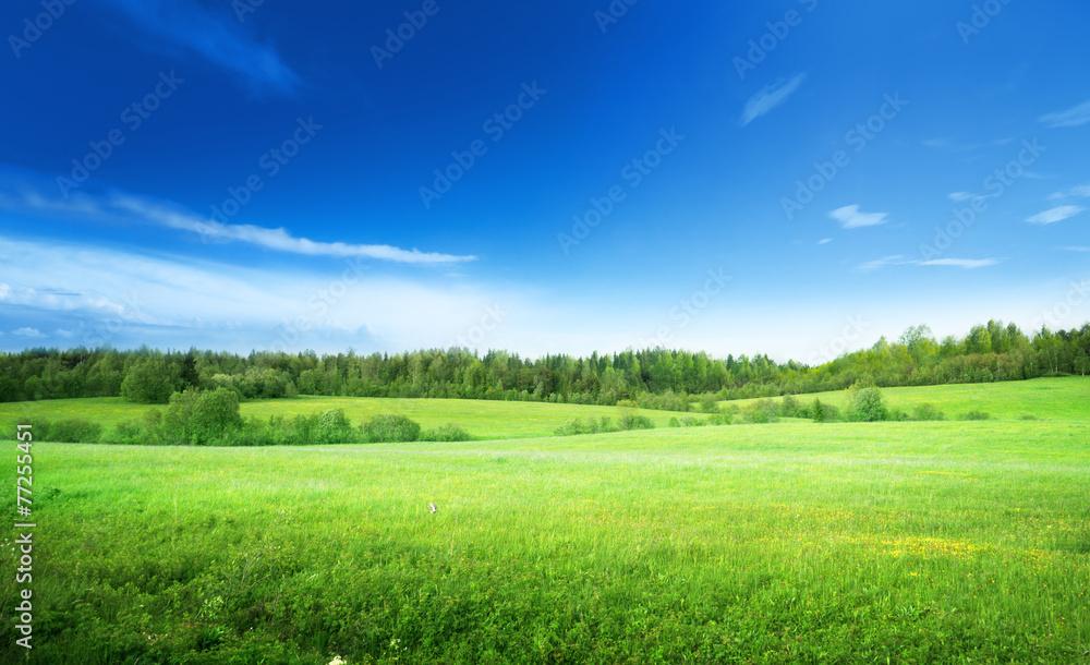 Fototapeta field of grass and perfect sky
