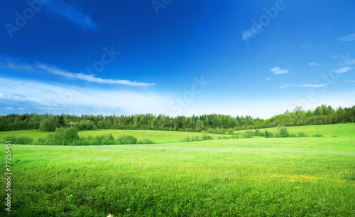 Foto op Plexiglas Gras field of grass and perfect sky