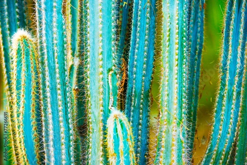 Photo  Cactus Specie
