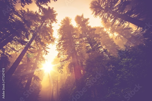 Misty Forest Trail Canvas Print