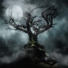 Upiorne Drzewo We Mgle Na Tle ...