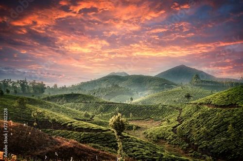 Fotobehang Zalm Tea plantations