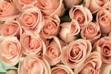Róże w stylu retro