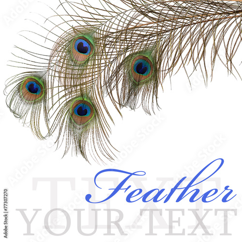 Foto op Aluminium Pauw Feather of peacock isolated on white background
