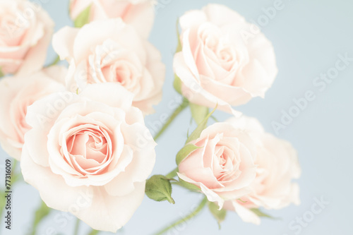 Fotografie, Obraz  Pastel pink roses, muted colors