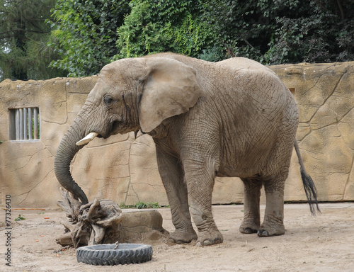 Poster Parrot African elephant