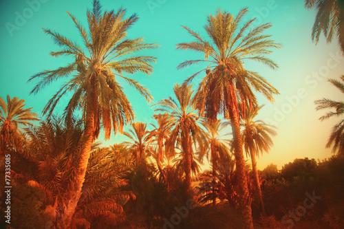 Fototapeta Palms