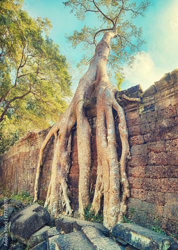 Photo  Preah Khan Temple ancient tree roots, Angkor