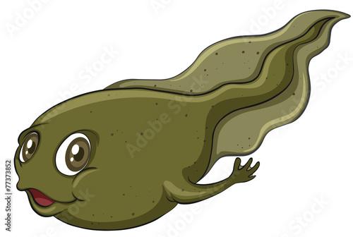Valokuva A tadpole