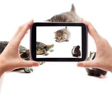 Take A Photo Of Pets Smartphone