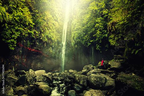 Fotobehang Bossen Cascade et Forêt tropicale