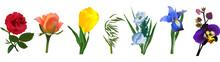Rainbow Colors Flowers Isolated On White Illustration