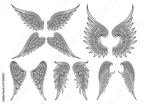 Foto  Heraldische Flügel oder Engel des Vektors