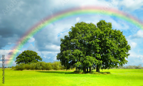 Tuinposter Lime groen Rainbow over field