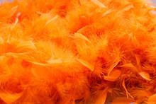 Orange Background Whit Feather...