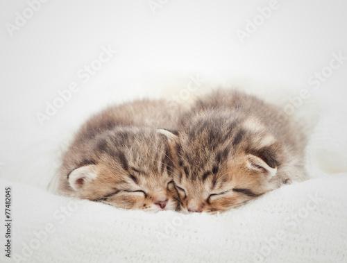 Two cute kitten sleeping on white blanket