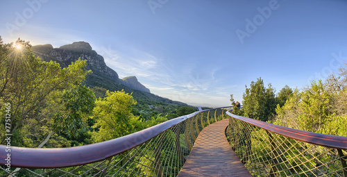Photo Stands South Africa Kirstenbosch National Botanical Garden in Cape Town South Africa