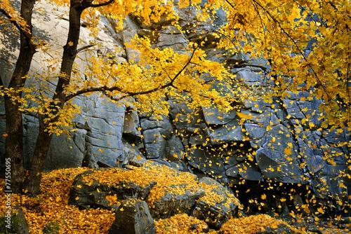 Foto op Canvas Herfst Beautiful fall scene