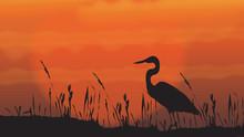 Crane (bird)