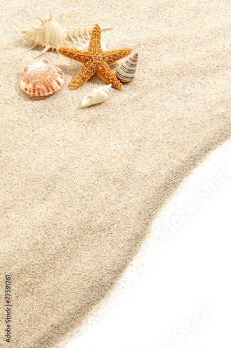 Fotografie, Obraz  Starfish & Shells on Beach Sand
