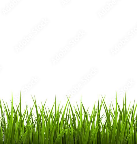 Zielonej trawy gazon odizolowywający na bielu. Backgrro kwiecisty natury wiosna