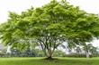 Beautifull green tree