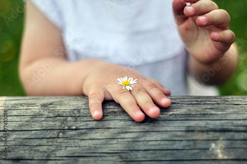 Fotografija gänseblümchen mit kind
