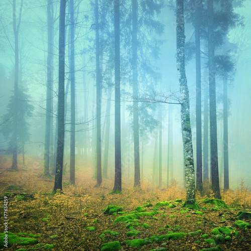 Foggy mystic colorful forest