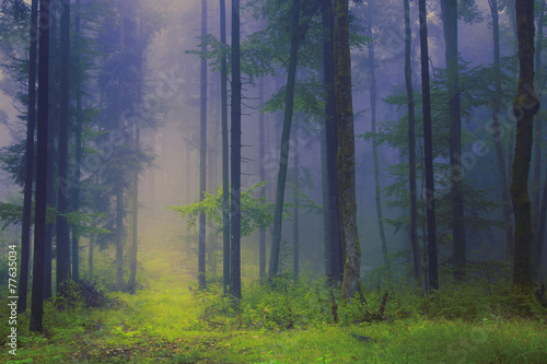 Scary foggy forest scene