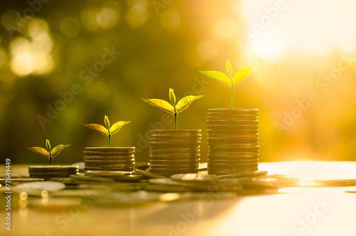 Fotografía  Money growing concept