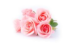 Pink Rose Flower On White Back...