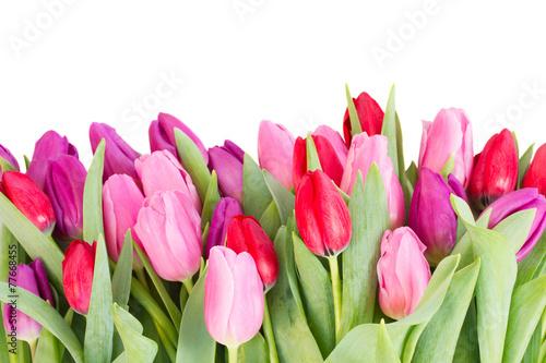 bukiet-czerwonych-i-fioletowych-kwiatow-tulipanow