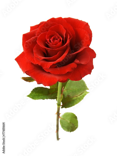 Staande foto Roses Red rose with leaves isolated on white