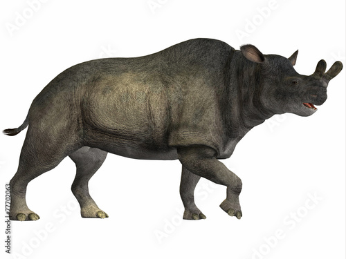 Fototapeta  Brontotherium on White