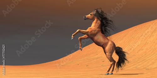 Photo  Desert Wild Horse
