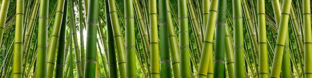 Fototapeta Dense Bamboo Jungle