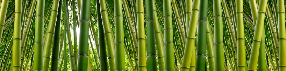 Panel SzklanyDense Bamboo Jungle