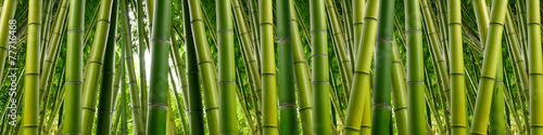 Deurstickers Bamboe Dense Bamboo Jungle