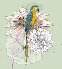 Fototapeta Ptaki parrot